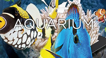 Aquarium – Ultra HD