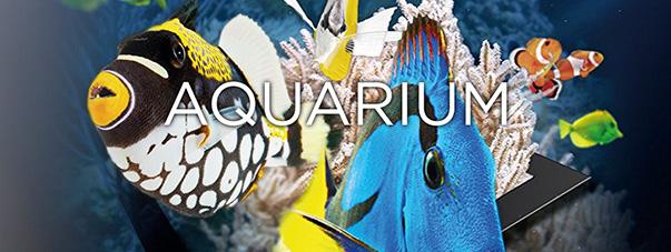 Aquarium – Ultra HD
